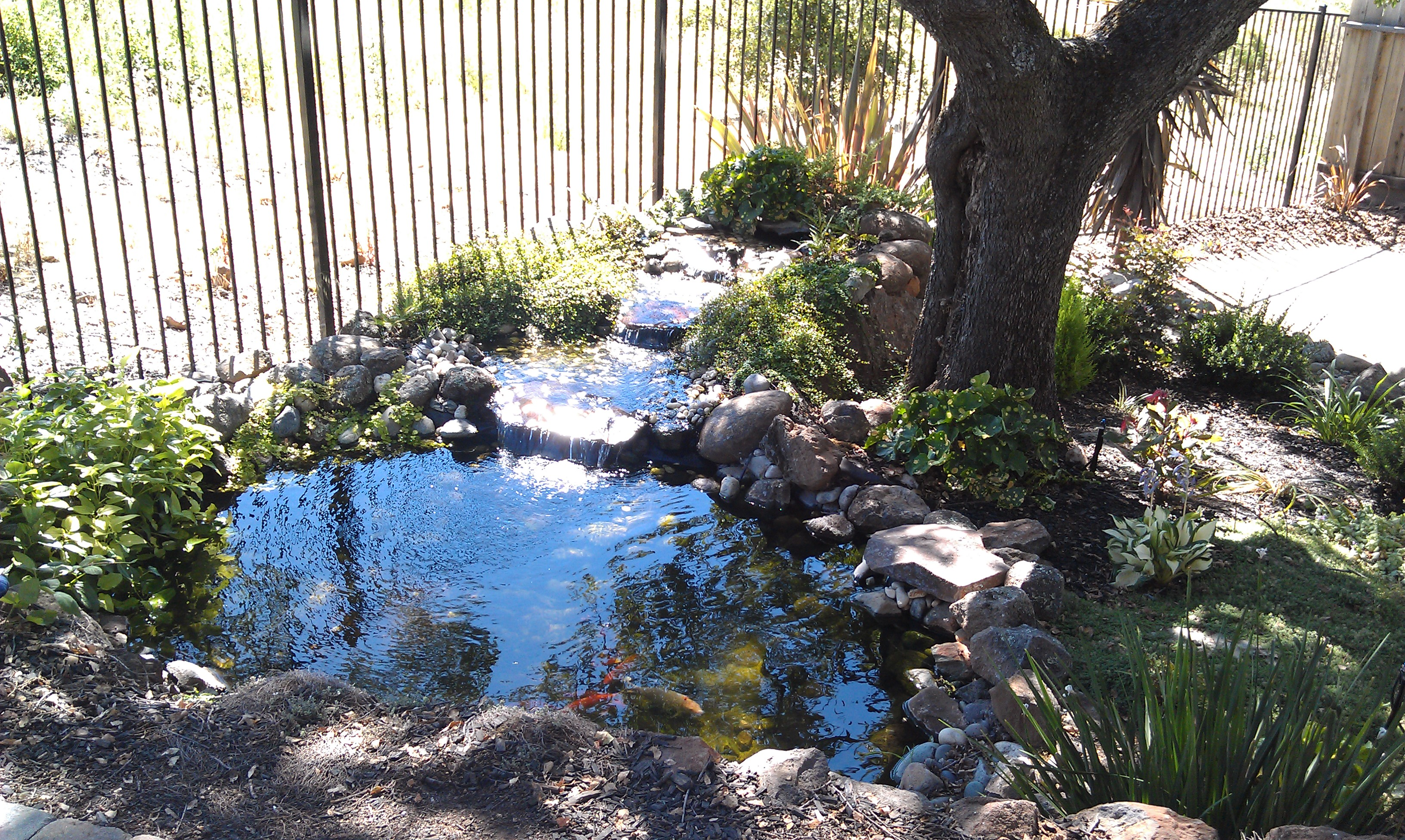 Koi Pond Back Yard Oasis